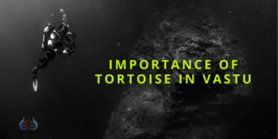 Importance of Tortoise and its placement as per Vastu