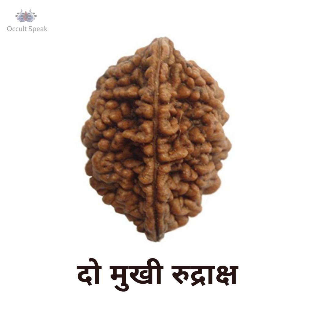 Do Mukhi Rudraksha